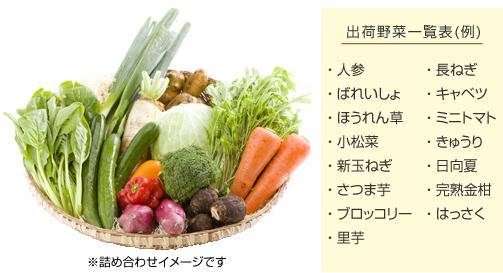 出荷野菜一覧表(例)